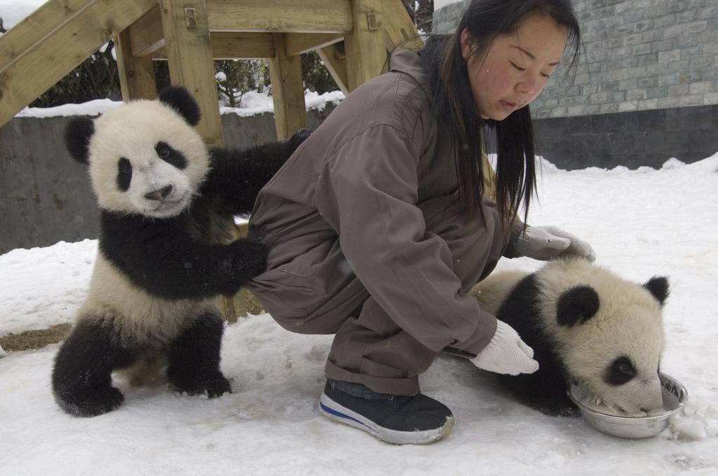 如何保护大熊猫栖息地? 林业专家提方案