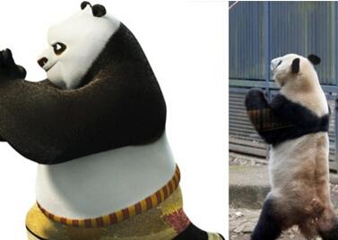 大熊猫打拳抓拍:神同步《功夫熊猫》阿宝