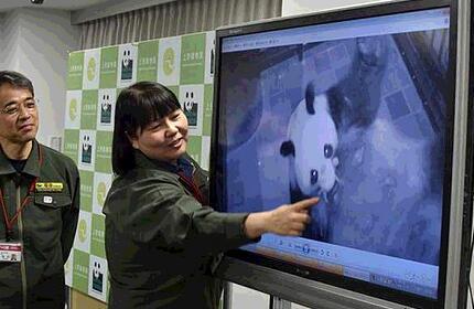 五年来首次!东京大熊猫