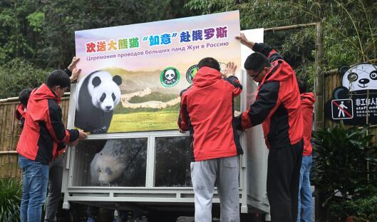 """环球之旅:雅安大熊猫""""闯天下"""""""